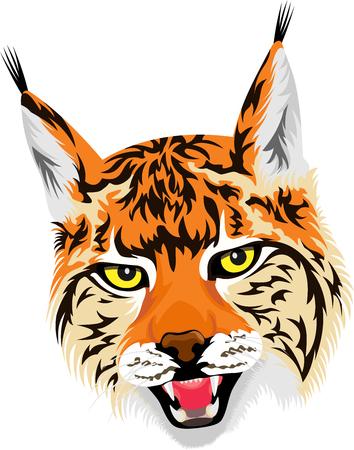 Vector wild lynx head
