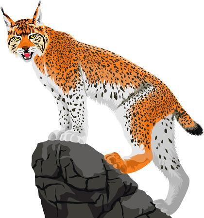白で隔離、岩に立っている野生のオオヤマネコのベクター イラストです。