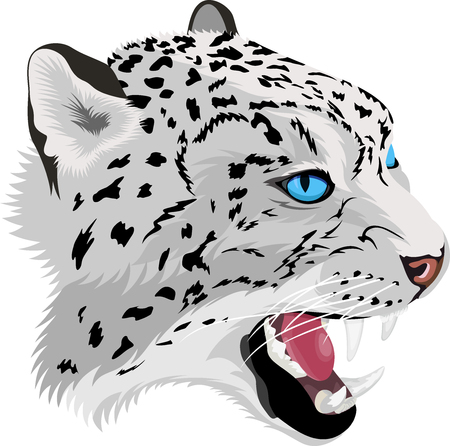 Vector head of roaring snow leopard