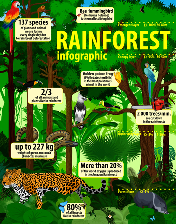 Rainforest jungle infographic with animals - vector illustration Ilustração