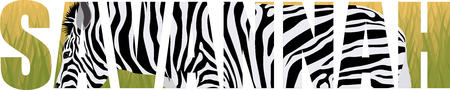 vector zebra in savannah illustration