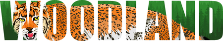 Woodland illustration with wild lynx