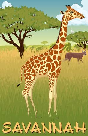 African savannah with giraffe, heron and caracal - vector illustration