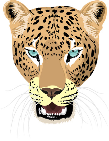 vector isolated leopard head Illustration