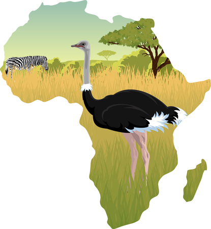 African savannah with ostrich and zebra - vector illustration