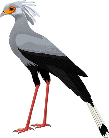 Secretary bird (Sagittarius serpentarius) vector illustration