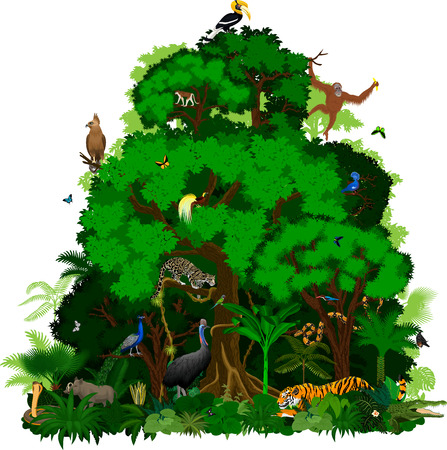 Vector indonesian Rainforest Jungle tropical forest with animals