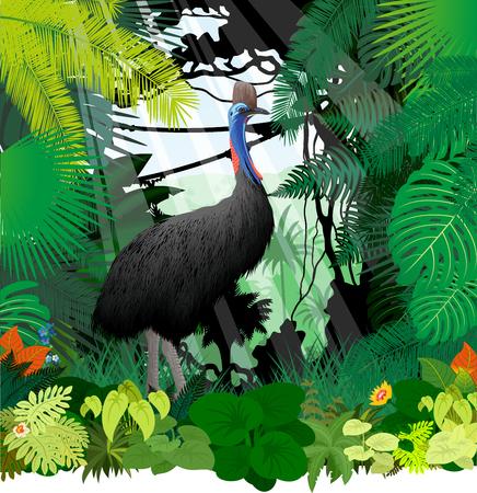 casoar de vecteur dans la forêt tropicale de la jungle