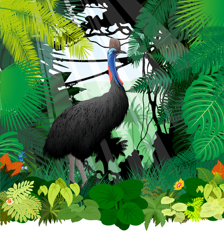 vector cassowary in jungle rainforest