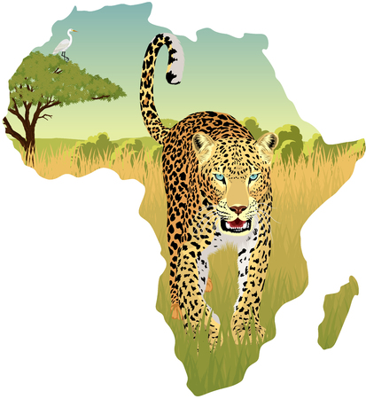 African savannah with heron and leopard - vector illustration Illustration