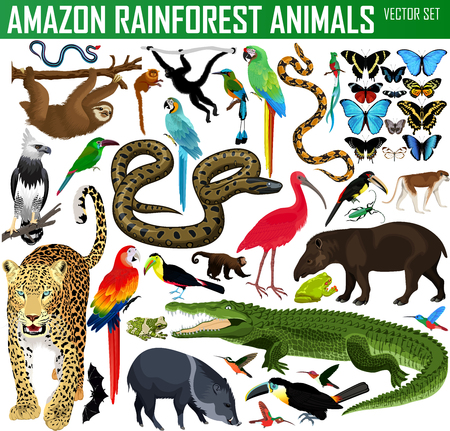 big set of vector amazon rainforest jungle animals
