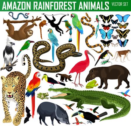 duży zestaw zwierząt dżungli amazońskiej wektor dżungli