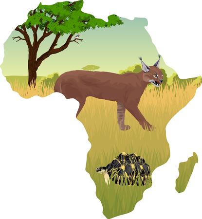 African savannah with caracal and radiated tortoise - vector illustration
