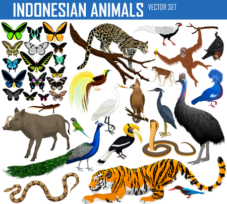 Animals of Indonesia and Indochina - vector set Illustration