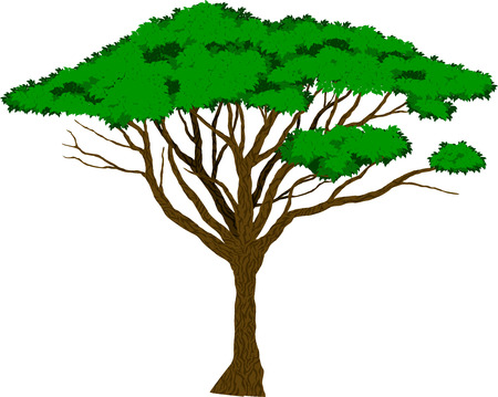 Vector Large african Acacia tree  イラスト・ベクター素材