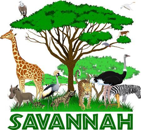 vector african savannah with leopard, girrafe, vulture, zebra, ostrich, warthog, cobra, crowned crane, parrot and heron