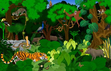 vector Thailand jungle rainforest illustration with animals Illustration