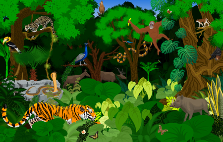 vector Thailand jungle rainforest illustration with animals Vectores