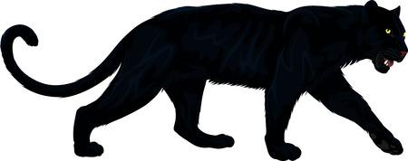 wektor czarna pantera Ilustracje wektorowe