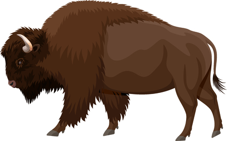 벡터 갈색 zubr 버팔로 들소