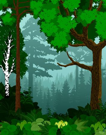vector woodland green forest trees backlit Illustration