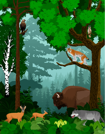 vector woodland green forest trees backlit with bison, wolf, lynx, owl, moose and deers