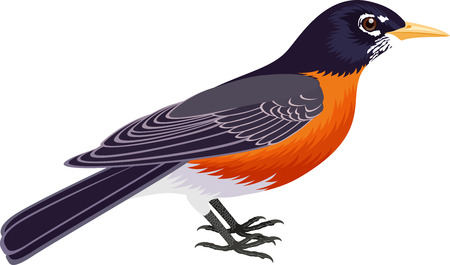 vector of american robin bird (Turdus migratorius)
