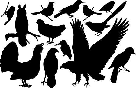 conjunto de vectores de siluetas de pájaros del bosque