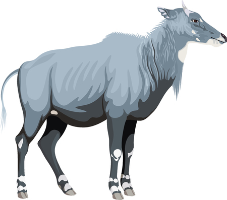 Vector male nilgai - blue bull