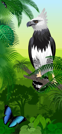 Vector Jungle rainforest vertical baner with harpy eagle and morpho butterflies