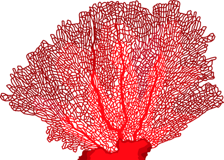 vector tropical coral