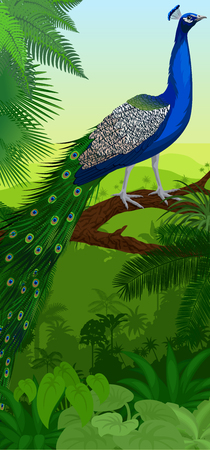 Vector Jungle rainforest vertical baner with male peacock peafowl Illustration