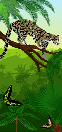 Vector Jungle rainforest vertical baner with clouded leopard (neofelis nebulosa) and trogonoptera birdwings butterflies