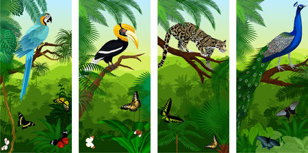 Vectors of jungle rainforest vertical baners with clouded leopard, peacoock, blue ara, great hornbill and butterflies Ilustração