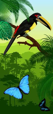 Vector Jungle rainforest vertical baner with pale-mandibled aracari toucanet and morpho butterflies