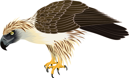 vector philippine Eagle - Pithecophaga jefferyil