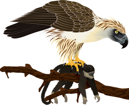 vector philippine Eagle - Pithecophaga jefferyil with monkey