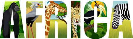 Africa illustration with giraffe, gorilla, leopard, be-bird, zebra and great hornbill