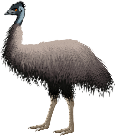 Vektor Australischer Strauß Emu