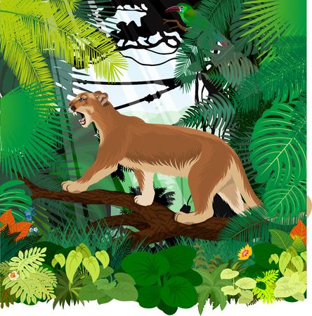 puma cougar (Puma concolor) or mountain lion and Crimson-rumped toucanet in jungle rainforest
