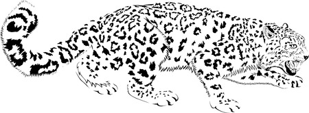 Black and white mountains snow leopard