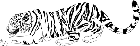 drawings black and white predator tiger design for tattoo