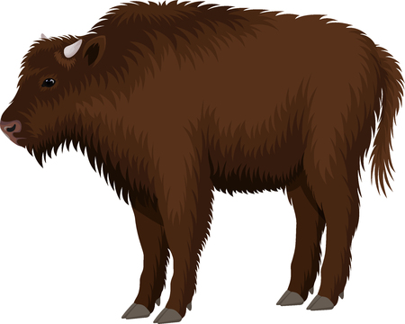 kid child brown zubr buffalo bison