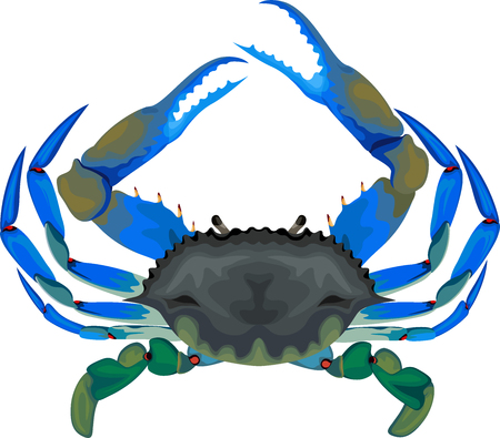 blue crab Stock fotó - 109201904