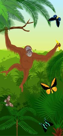 Vector Jungle rainforest vertical baner with orangutan and butterflies
