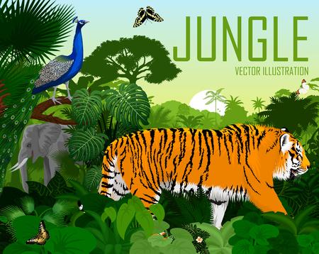 Vector jungle rainforest with tiger, elephant, male peacock and butterflies Ilustração