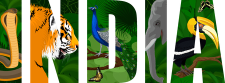 vector india male peacock peafowl, tiger, elephant, cobra snake and great hornbill