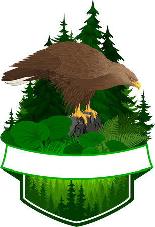 vector woodland emblem with white-tailed eagle Illustration