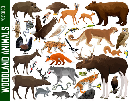 vector set of woodland animals Standard-Bild - 122423146