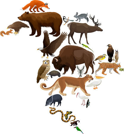 Vector North America fauna map, flat elements. Animals, birds, reptiles, insects and amphibian big set. Geography infographic illustration